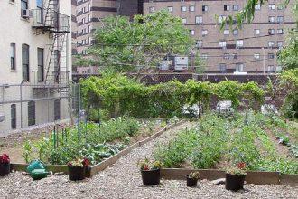 NYC Urban Garden