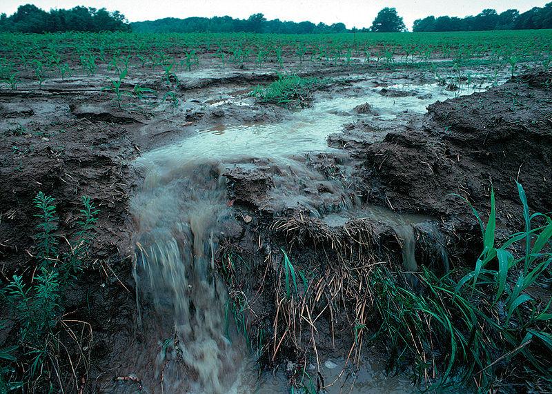 Runoff in a cropfield