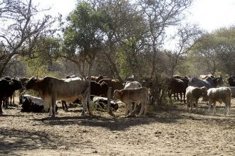 drought in Africa