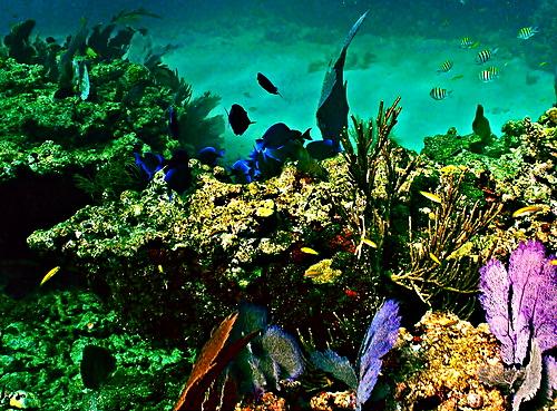 coral reef off the Florida coast