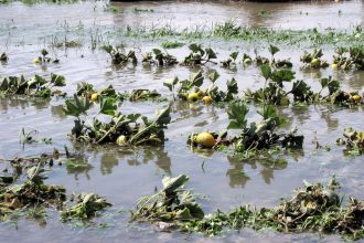 A flooded vegetable field at Hawthorne Valley Farm