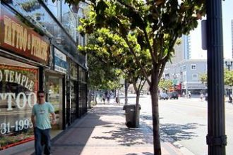 Magnolia trees on Broadway, a busy street in downtown San Diego