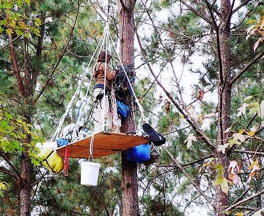 Protester perched at the top of an 80-foot tree in a patch of old-growth forest