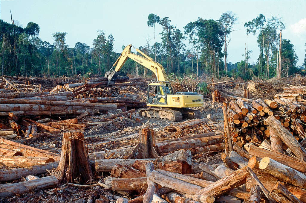 Deforestation, particularly in the tropics, is a huge climate problem.