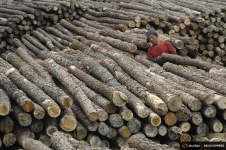China has regrown many of its forests, but its imports contribute to deforestation elsewhere