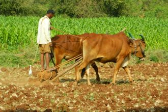 More people in India and other areas of Asia means more farming