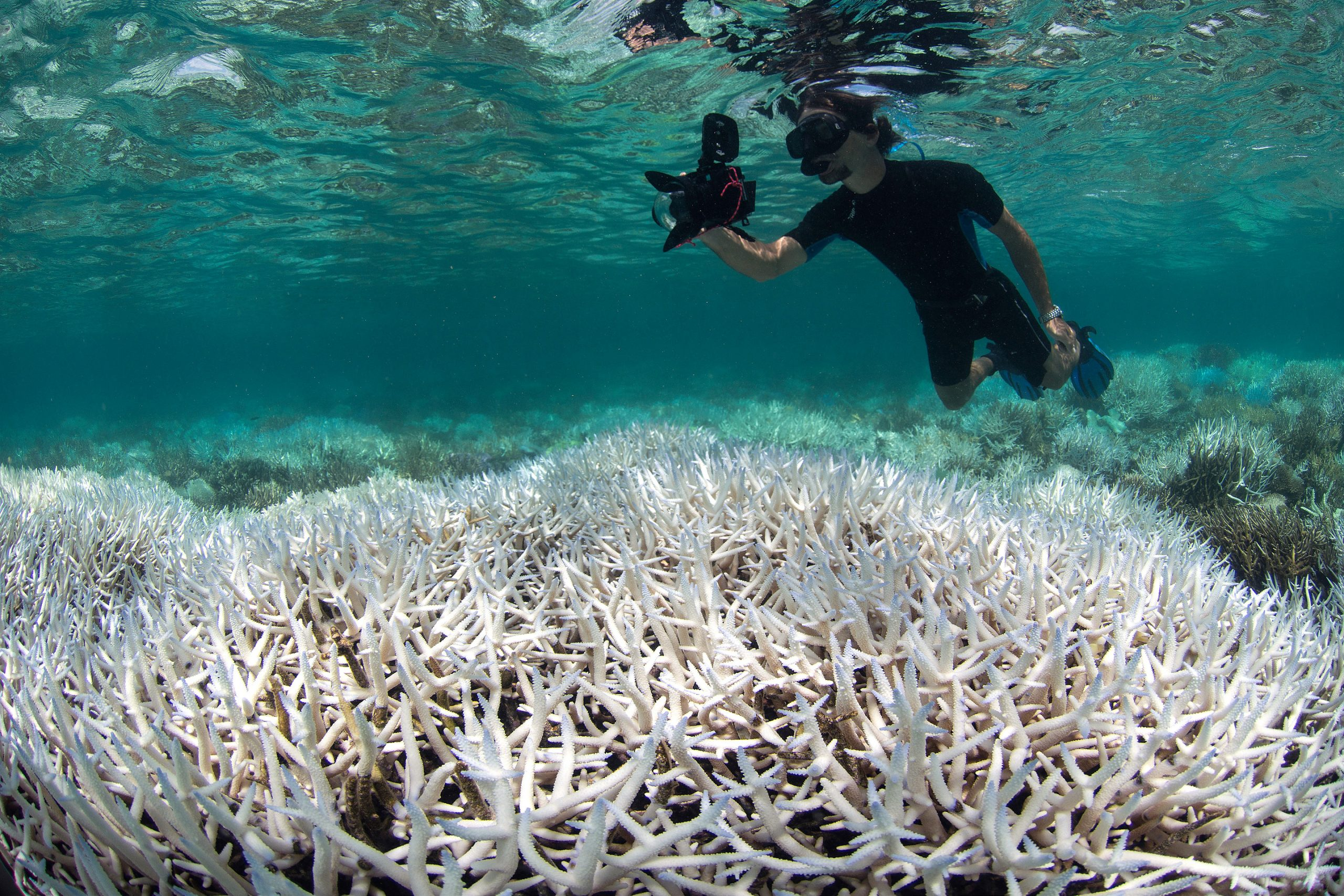 Bleached coral shown next to healthy coral in the Great Barrier Reef