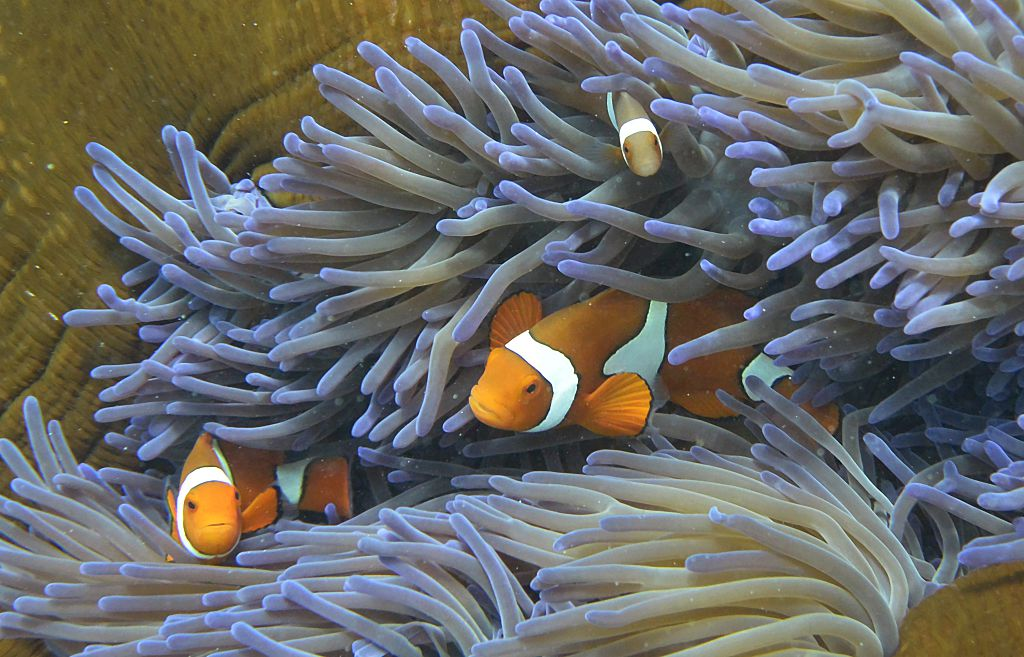 Ocean warming will have huge impacts on coral reefs and marine life