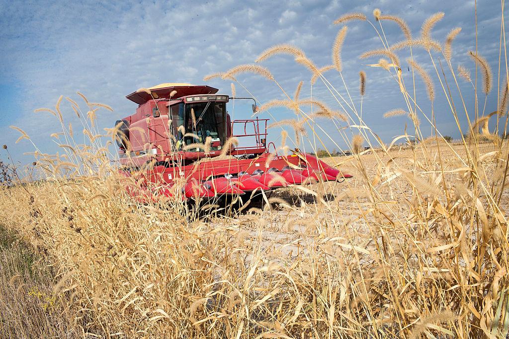 Iowa farmer harvests corn as farming techniques come under scrutiny