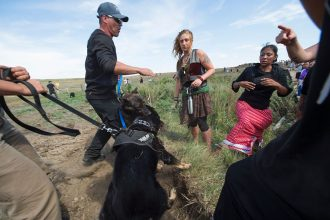 Native American pipeline protesters were met by security with dogs and pepper spray