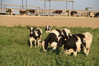 California dairy industry has evaded regulation on most kinds of pollution until now