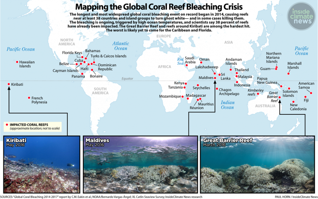 The latest coral bleaching reaches across the globe