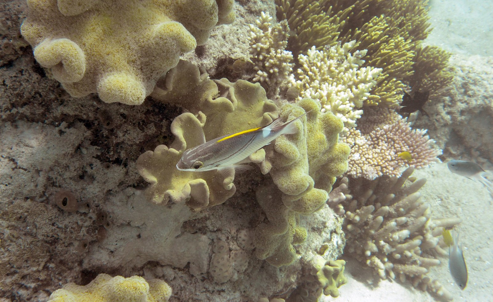 Coral bleaching has ravaged the Great Barrier Reef