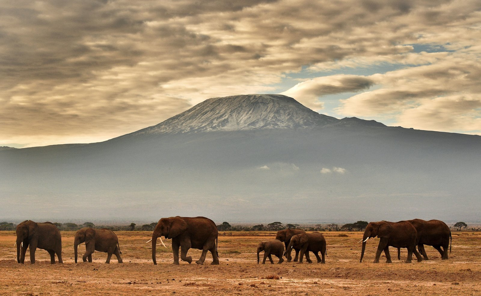 Elephants are among the species hit particularly hard by climate change's impacts
