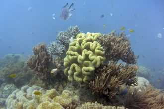 The Great Barrier Reef has experienced a series of damaging bleaching events