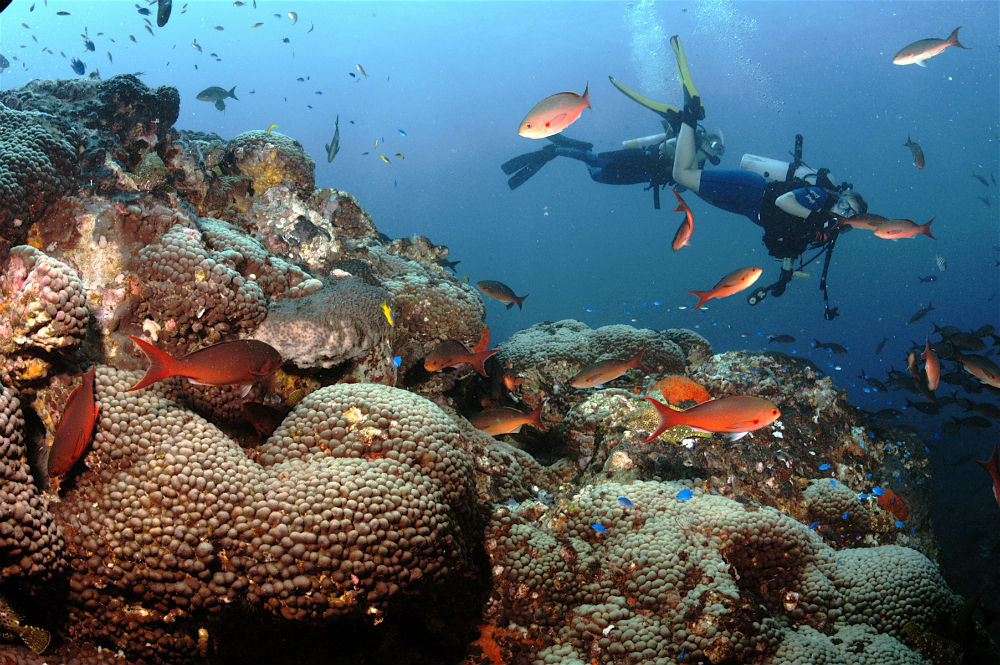 A diver among the corals of Flower Garden Banks