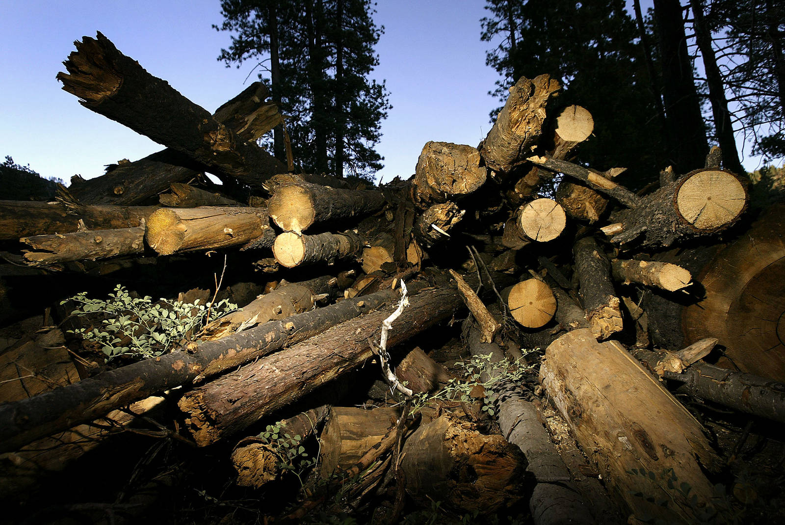 """The report also seeks to rebut the notion that burning wood is a """"carbon neutral"""" alternative to burning coal and oil for electricity."""