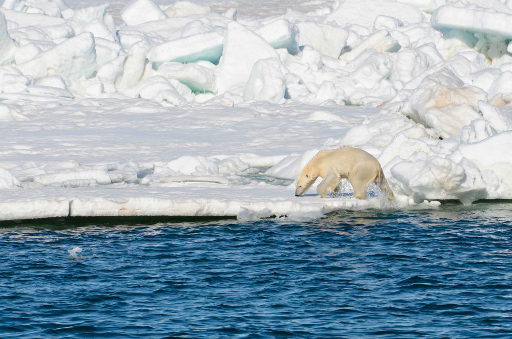 Polar bear on sea ice