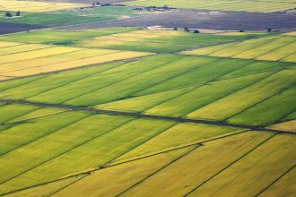 Rice fields near Sacramento, California. Credit: Mark Miller/CC-BY-3.0