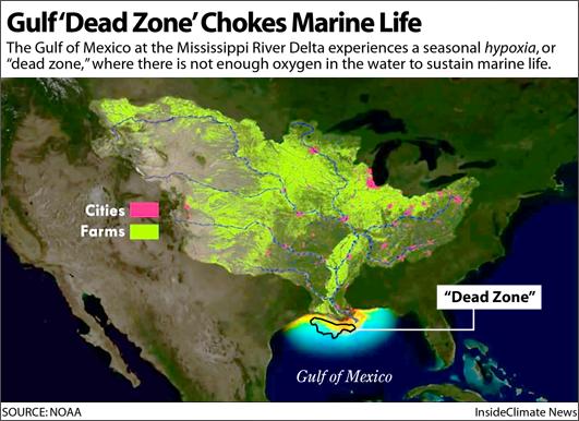 Gulf 'Dead Zone' Chokes Marine Life