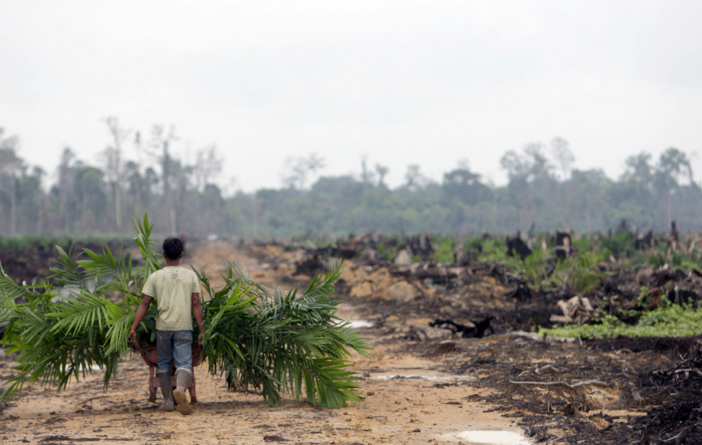 Indonesia has feed the world's appetite for palm oil by chopping down its tropical forests to clear space for palm oil plantations.
