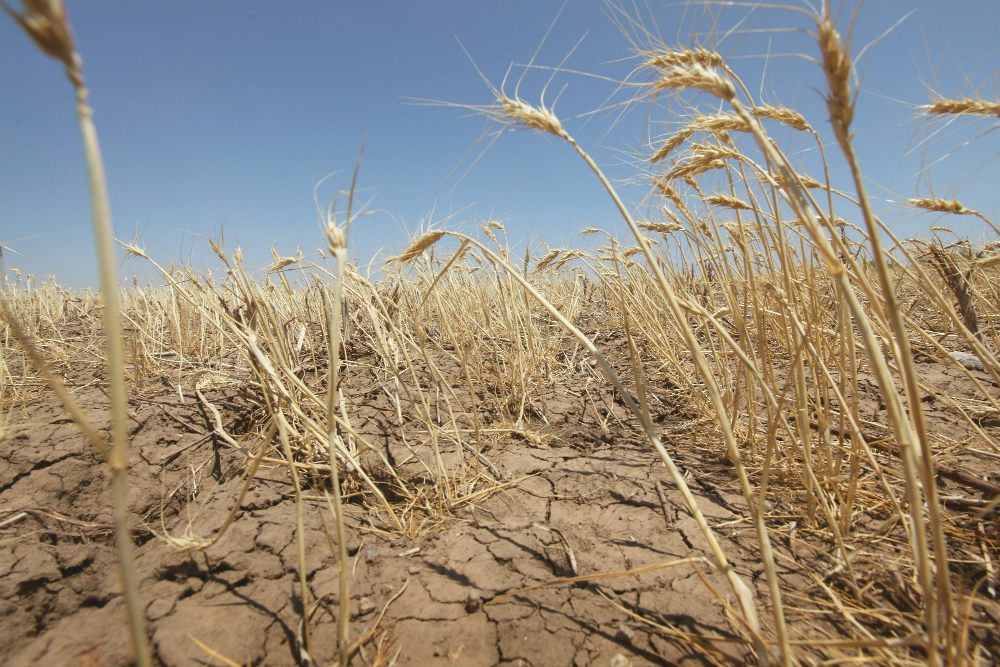 In every month of 2016, at least 12% of global land was in severe drought, the State of the Climate in 2016 report shows. Credit: Scott Olson/Getty Images