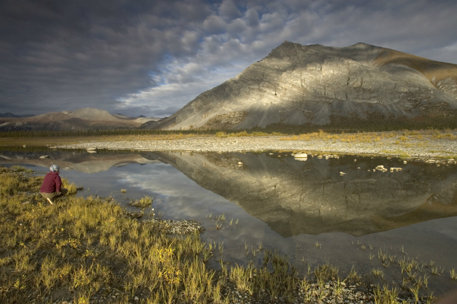 Arctic National Wildlife Refuge. Credit: Hillebrand/U.S. Fish and Wildlife Service