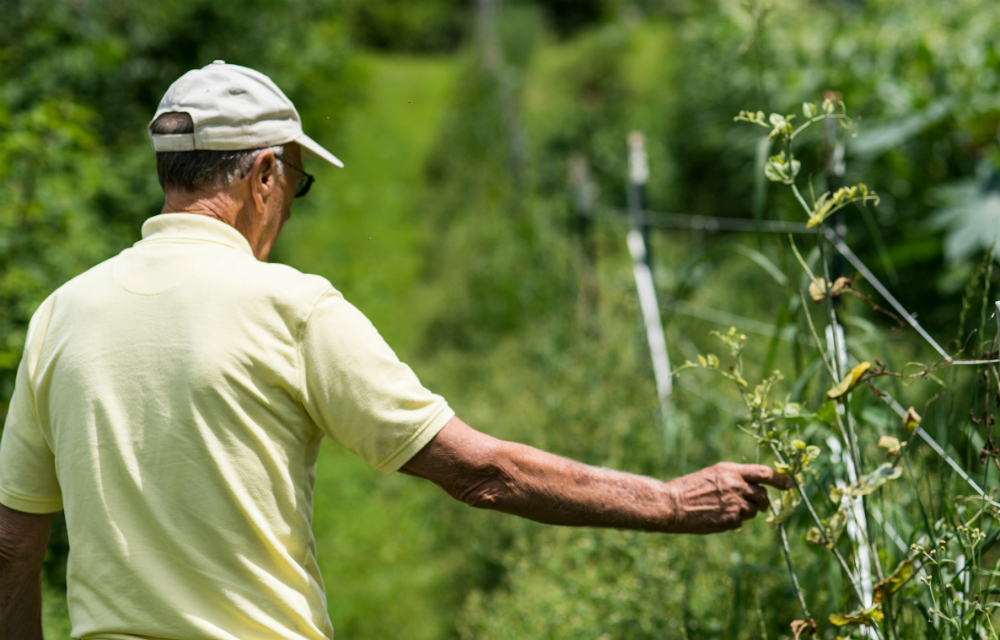 Bethel Brock tends his garden in Wise, Virginia. Credit: Lathan Goumas for InsideClimate News