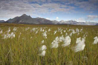 Arctic National Wildlife Refuge. Credit: Steve Hillebrand/U.S. Fish and Wildlife Service
