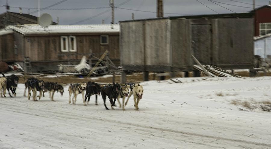 Sled dogs in Kaktovik. Credit: Anita Ritenour/CC-BY-2.0