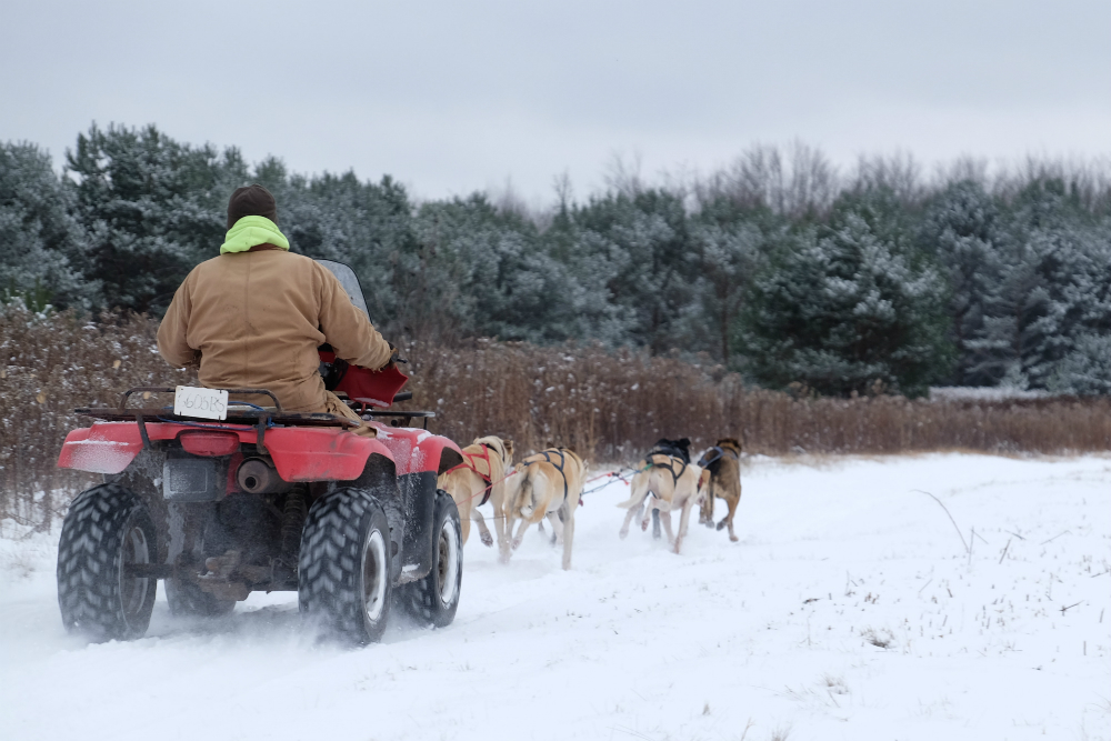 When there isn't enough snow for a sled but too much for a dryland racing cart, Mel and Keith Omernick runs the dogs with an ATV, its motor running. Credit: Meera Subramanian