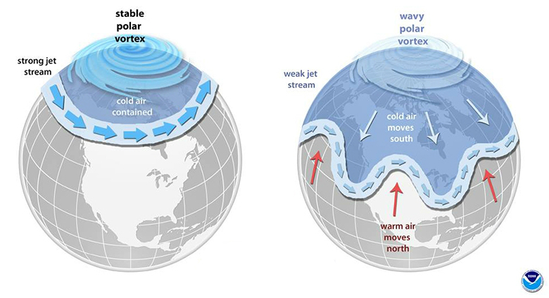 The polar vortex is an area of low pressure and cold air over the polar regions. When winds that keep the colder air over the Arctic (left) become less stable, cold air can dip farther south (right). Credit: NOAA