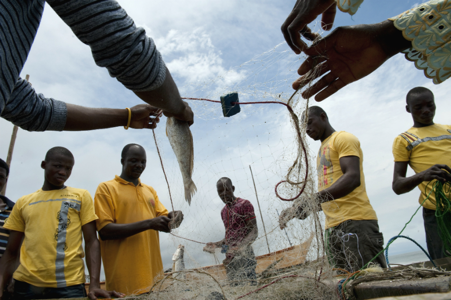 Many coastal communities in Africa, Asia and the islands rely on fishing for survival. Rising ocean temperatures and loss of reefs that serve as fish nurseries can cause fisheries to shift to cooler water. Photo Arne Hoel/World Bank