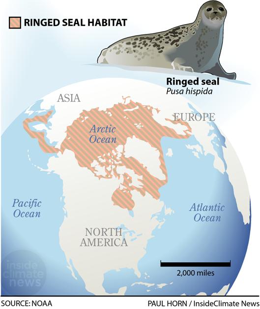 Ringed Seal Habitat Map