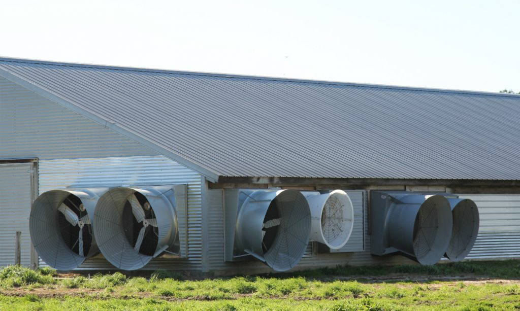 Giant fans circulate air into and out of the chicken houses. Credit: Georgina Gustin/InsideClimate News