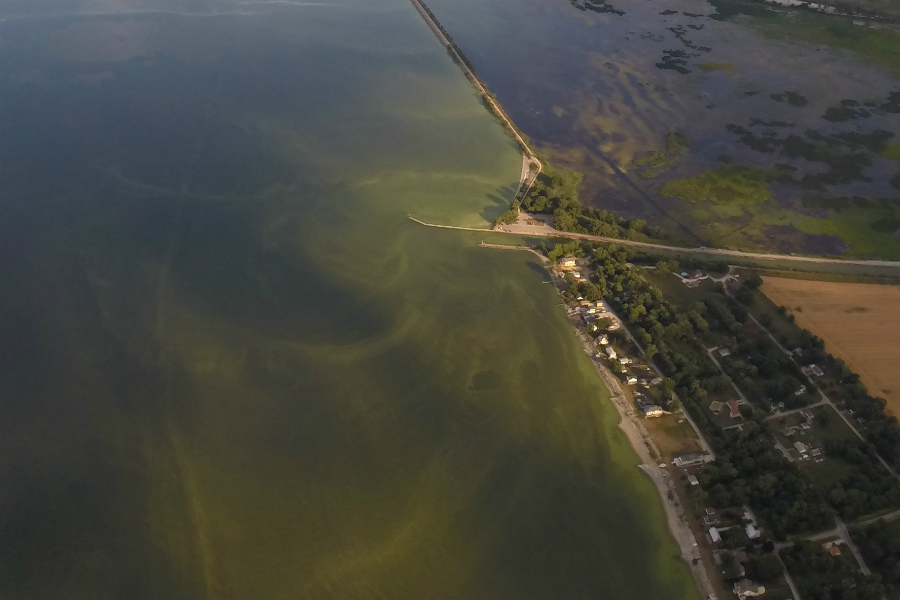 Algae blooms about 12 miles east of Toledo. Credit: NASA Glenn Research Center