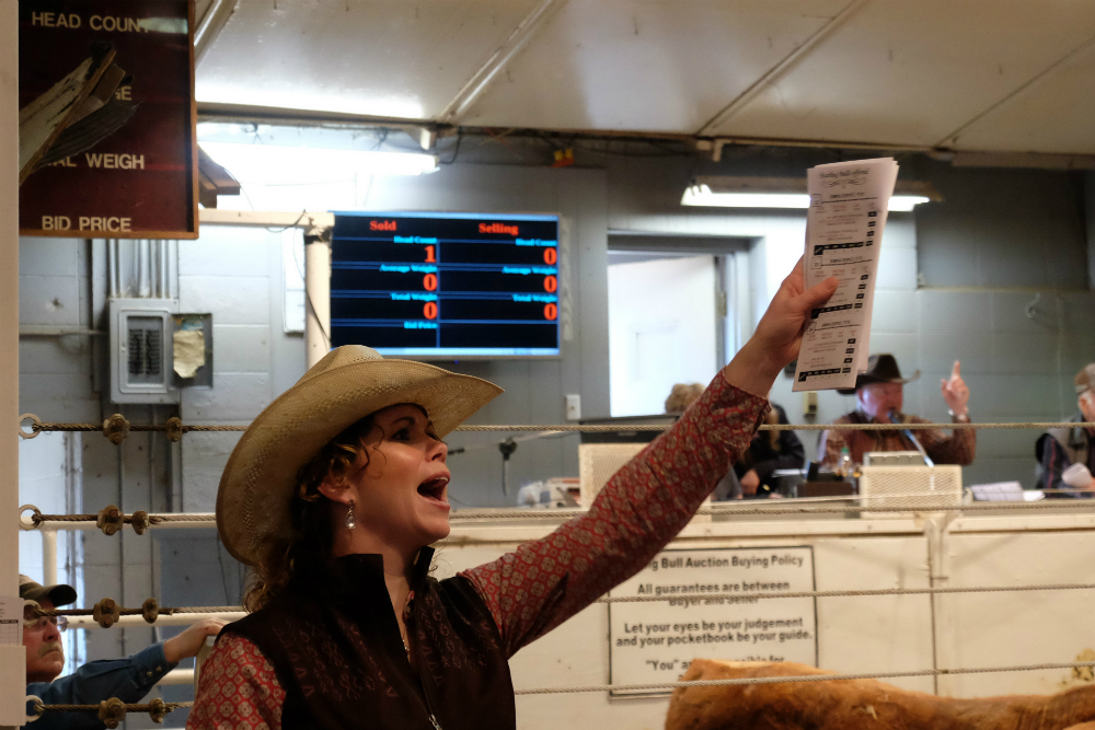 Amber Haugland, working at the Sitting Bull Auction. Credit: Meera Subramanian
