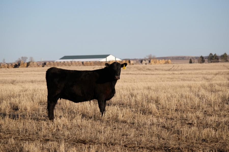 Divide County, North Dakota. Credit: Meera Subramanian