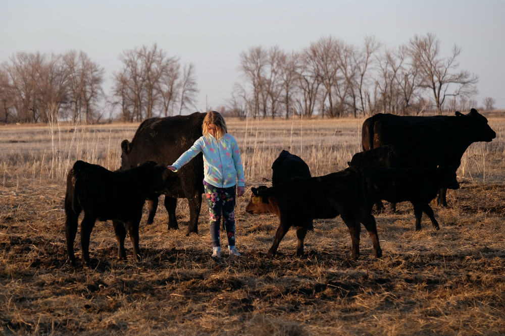 Riley Jo Caraballo, 8, is the next generation of Divide County rancher. Her mother, Sydney, wants to leave her a resilient ranch and a better planet. Credit: Meera Subramanian