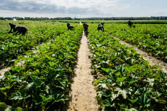 Farm workers in California. Credit: John Moore/Getty ImagesFarm workers. Credit: USDA