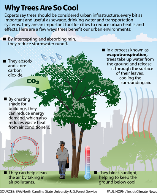 Infographic: Why Trees Are So Cool
