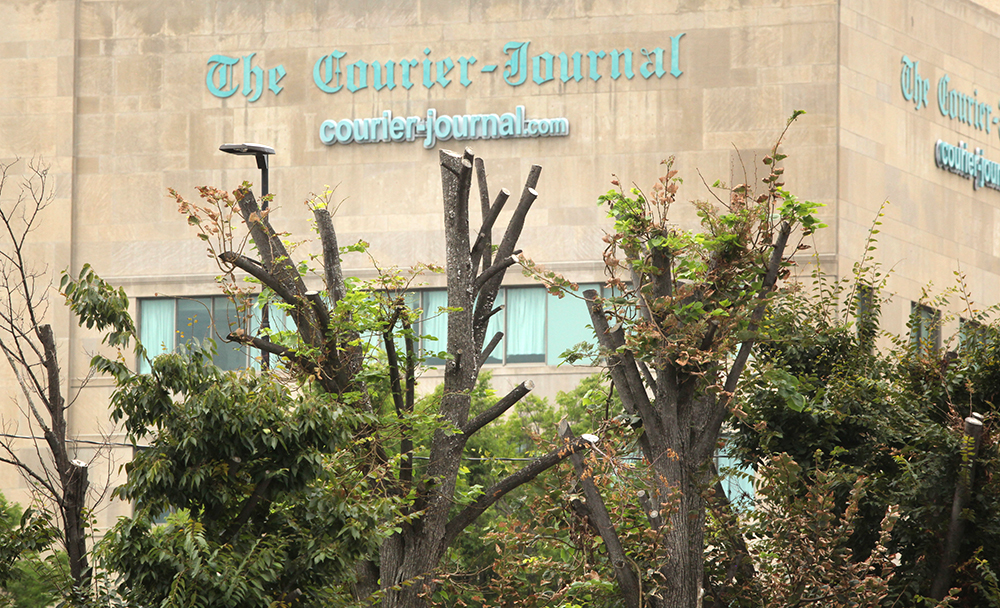 The tops of some 40 trees in a Louisville parking lot were legally cut out by the lot's owner, the Courier Journal newspaper, to clear the view for security cameras. Many of those trees are now dying. Credit: Michael Hayman/TreesLouisville