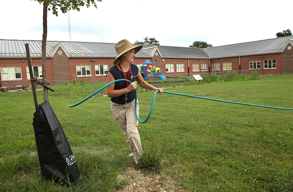 Maupin Elementary School Principal Maria Holmes drags a hose across school grounds to water newly planted trees. Credit: Michael Hayman/TreesLouisville