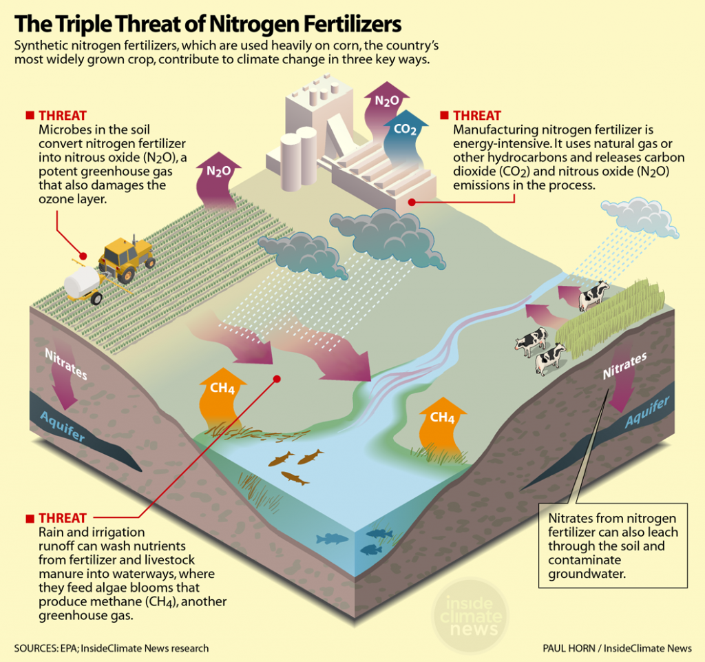 Infographic: The triple threat of nitrogen fertilizers
