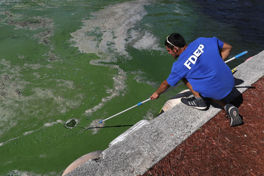 A Florida Department of Environmental Protection worker takes a sample of algae for testing. Credit: Joe Raedle/Getty Images