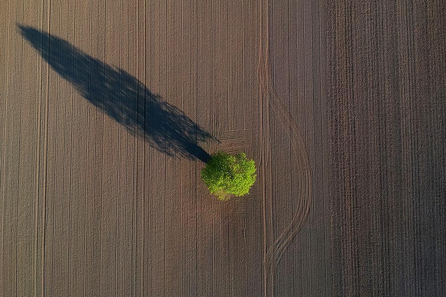 Tree in a field. Credit: Joel Saget/AFP/Getty Images