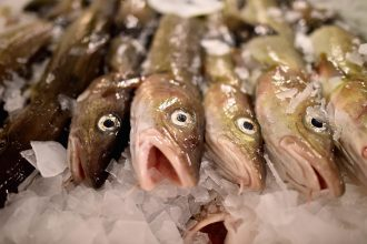 Cod at a market in Scotland. Credit: Jeff J. Mitchell/Getty Images