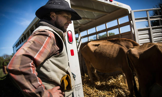 Not all farmers approve of the fossil fuel industry's expansions. Nebraska cattle rancher Ben Gotschall opposed the Keystone XL pipeline, which he believes could damage the state's environment. Credit: Andrew Burton/Getty Images