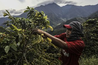 Picking coffee beans in Colombia. Credit: Joaquin Sarmiento/AFP/Getty Images