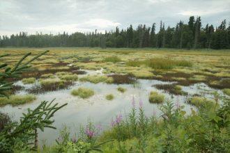 Alaska wetlands. Credit: S Hillebrand/USFWS
